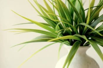 Best Indoor Plants, popular indoor plants, beautiful indoor plants, indoor house plants, low maintenance indoor plants