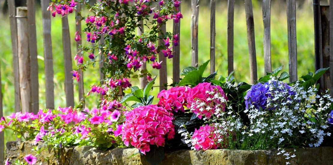 annual flowers, diy flower planters