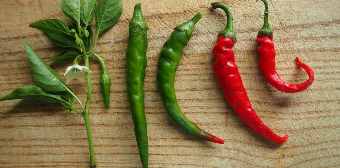 How to Grow Hot Peppers, Growing Chili Peppers, Chili Pepper Seeds, Grow Chili Peppers, Growing Hot Peppers
